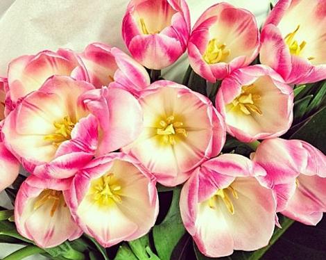 grandiflora sydney saskia the fragrant man thefragrantman tulips