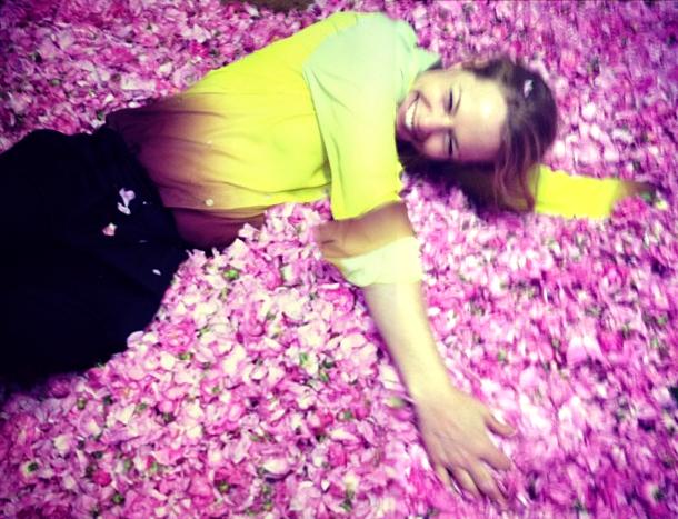 grandiflora sydney saskia the fragrant man thefragrantman rose petals