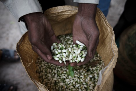 Jalalabad Farmer's Hands with Blossoms. Photo: The 7 Virtues