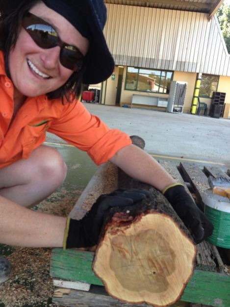 Australian worker with sandalwood log cross-section showing heartwood and sapwood. Photo: TFS